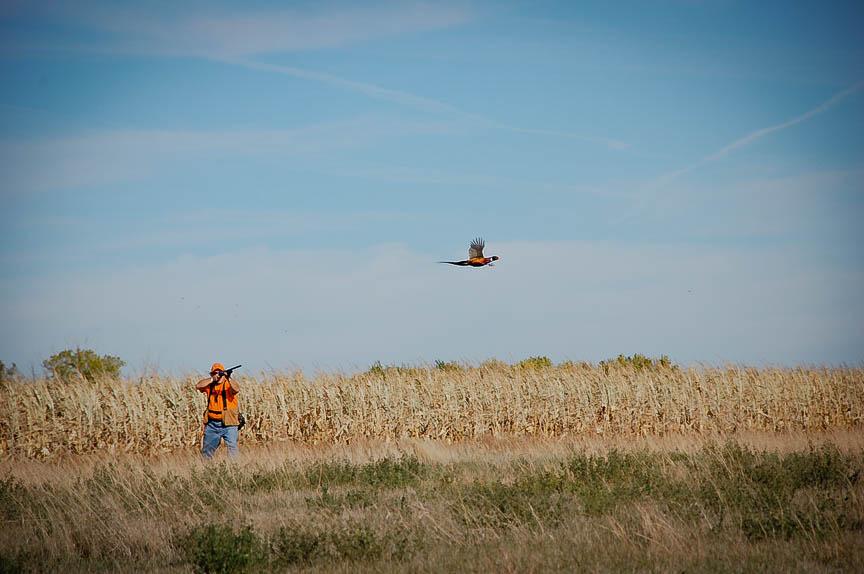 Pheasant hunting diamond a ranch south dakota for South dakota out of state fishing license